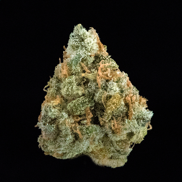 Artizen jack herer new