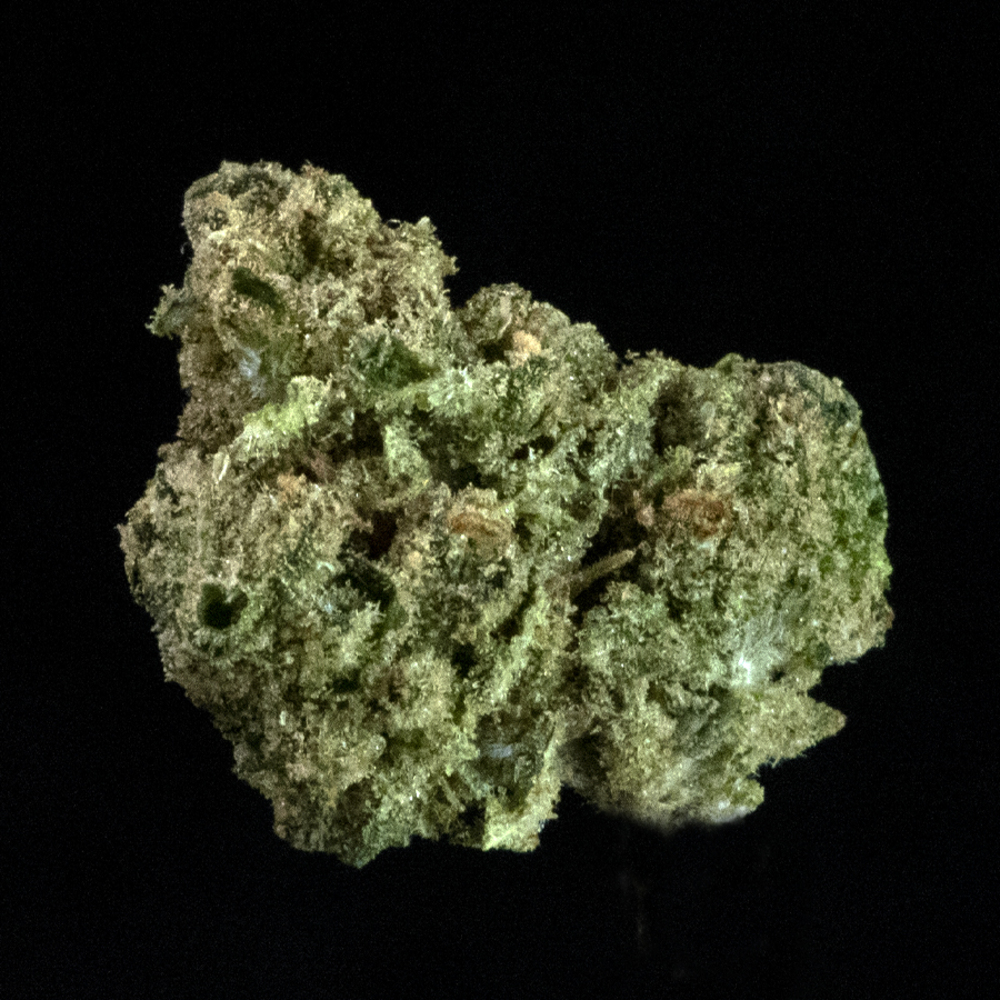 Grass valley jack herer