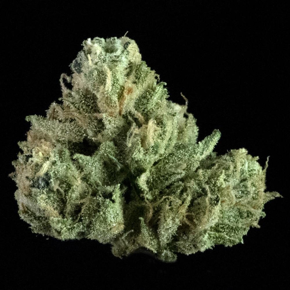 Rocket cannabis hazmat og