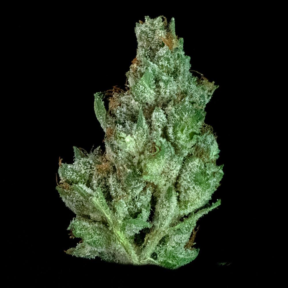 Fleek leaf cannabis mai tai